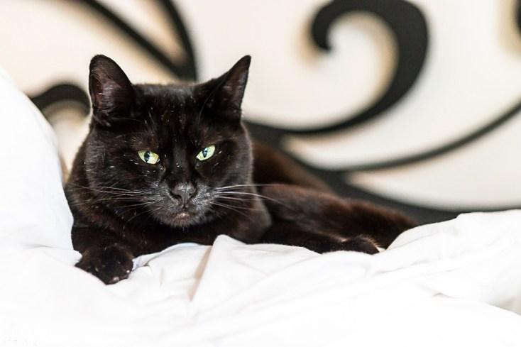 Die Katze liegt auch auf dem Bett, das bezogen werden sollte