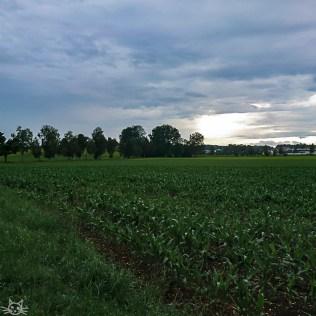 kurz Raus in den Regen aufs fotografisch unspannende Feld