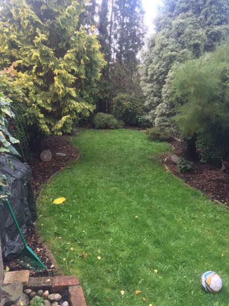 0558 rear garden in surbiton house