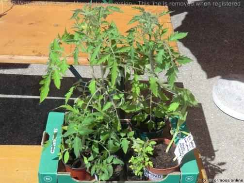 Tomaten, Kürbis, Physalis