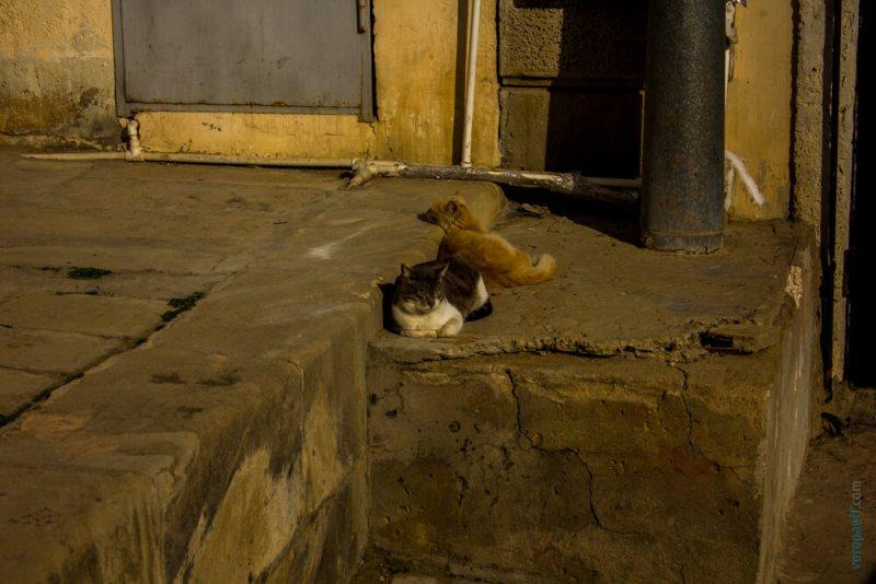 Кошки в Старом Баку