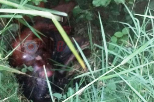 Encuentran cadáver putrefacto en Berriozábal