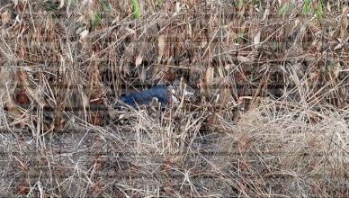 Hallan cabeza de joven en Ocosingo; el cuerpo fue encontrado horas antes