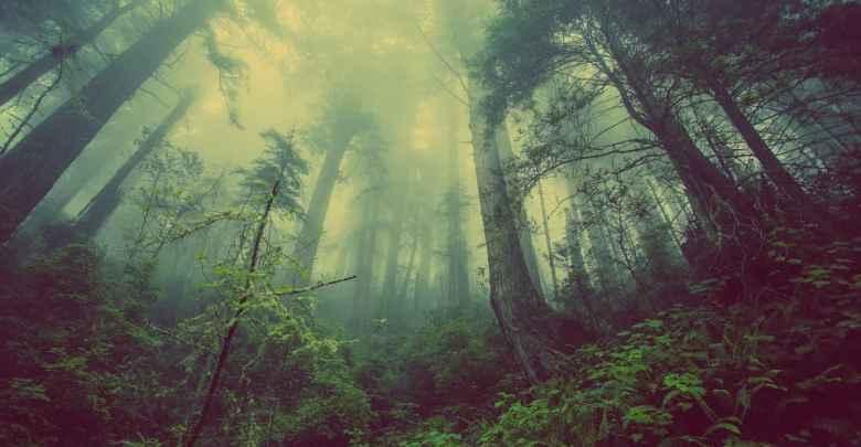 stromy forest-931706_960_720