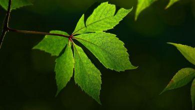 list leaf-3515342_1920