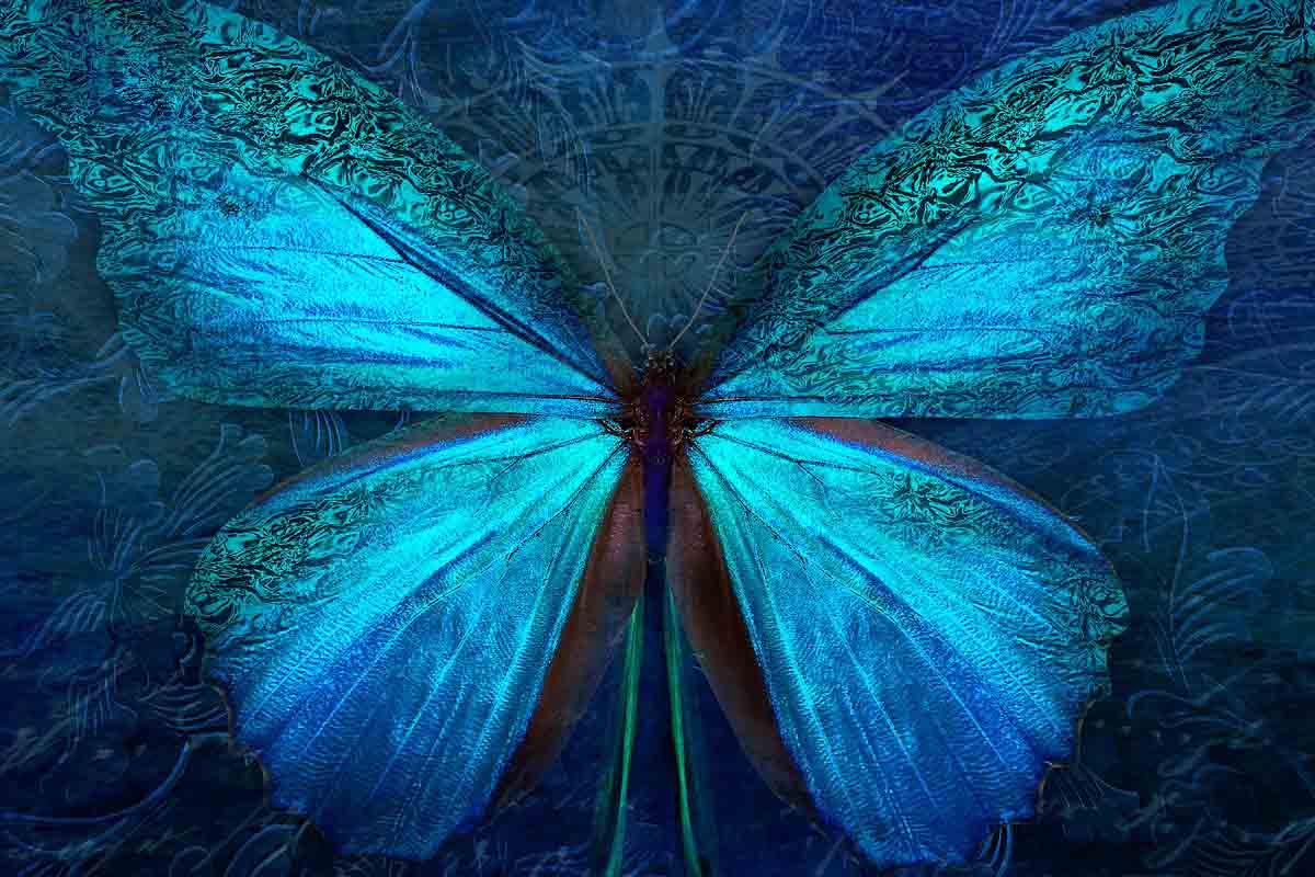 motýlí efekt