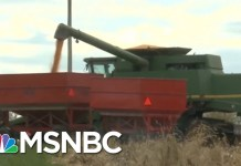 Nebraska Farmers Feeling Impact Of President Donald Trump's Trade War | Velshi & Ruhle | MSNBC
