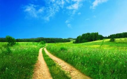 Chemin au milieu de l'herbe verte