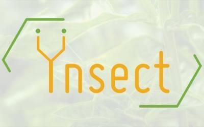 Ynsect : Le start-up française d'élevage d'insectes