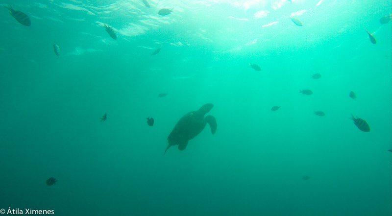 onde-mergulhar-em-barbados