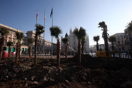 Some of the trees planted in the Piazza del Duomo in Milan, where it is under construction a green area.  The trees are sponsored by the giant Starbucks coffee shop which will arrive in 2018 with its first store in Milan.  The company won the tender of the City for the restyling of green spaces behind the equestrian monument to Vittorio Emanuele II.  The news has sparked some controversy by the center at Palazzo Marino.  Milan, 16 February 2017. ANSA / MATTEO BAZZI