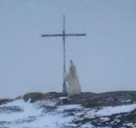 orso-croce2