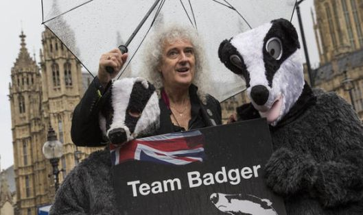 Brian May has hit out at the Government's war on badgers. What if it's covert preparation for fracking? [Image: Getty].