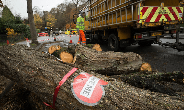 A 'save me' sign on tree cut down in Rustlings Road, Sheffield [Image: Danny Lawson/PA].