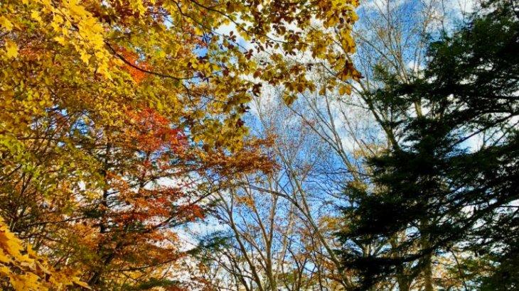 【2018年山梨の紅葉】大弛峠付近の林道は紅葉の絶景スポットだった!時期は?