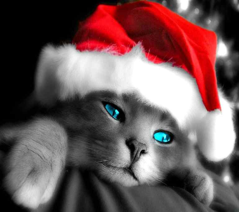 Ready_for_Christmas-wallpaper-10083922