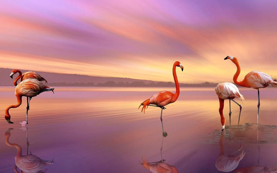 wallpaper et fond d'écran nature flamants rose animaux