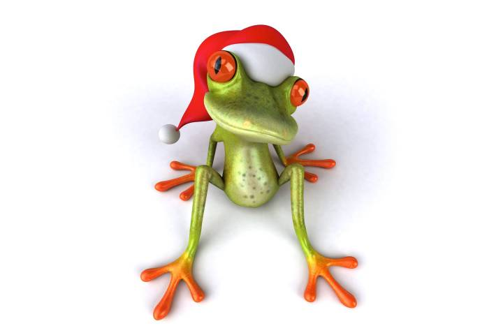 wallpapers et fonds d'écran grenouille noël humour
