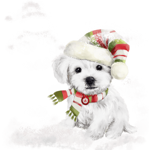 Beaux chiens Noël / Beautiful Christmas Dogs