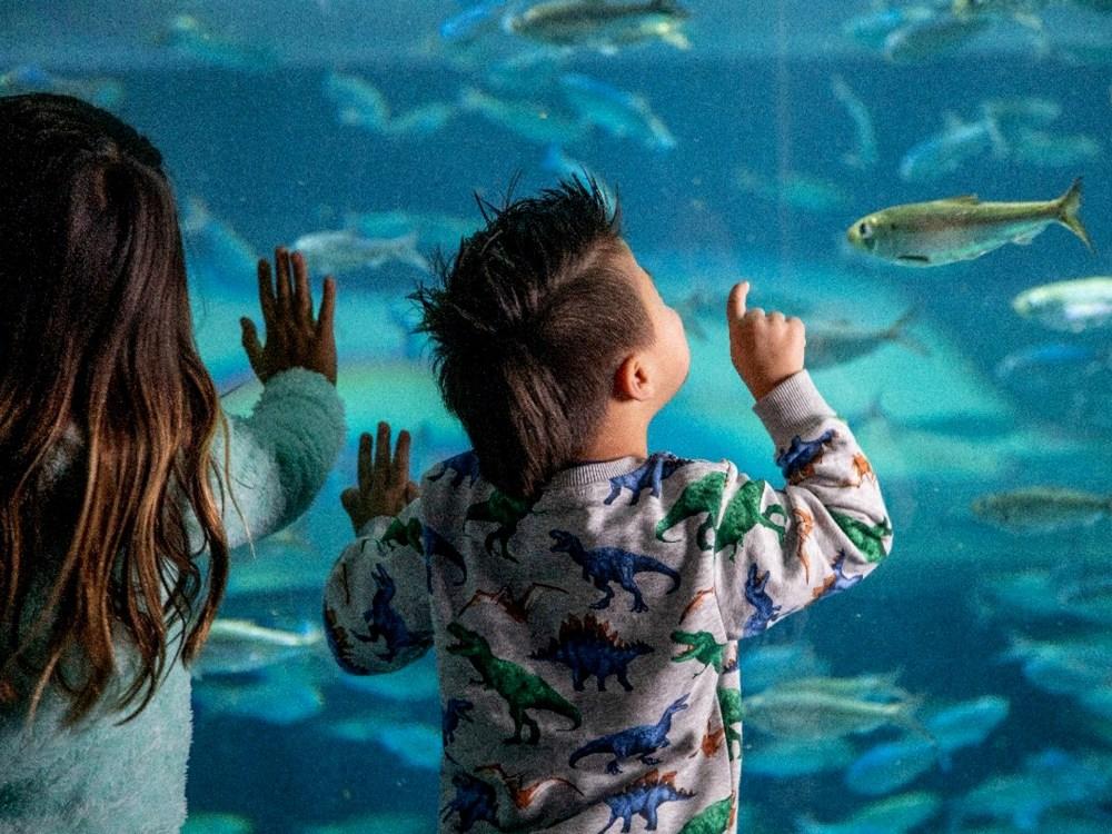 Deux enfants fascinés par une exposition à l'Aquarium Ripley's
