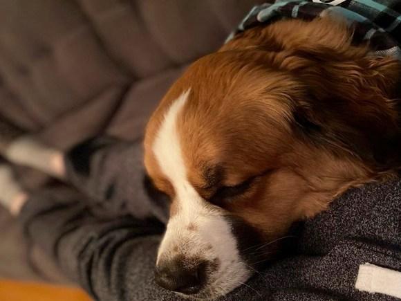 Un chien portant un bandana pelotonné contre son propriétaire