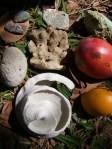 Autres petits trésors : pierre ponce, micro mangues, corail et autre caillou de composition géobiomoléculaire incroyable