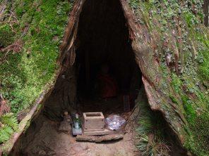 mini autel dans un arbre