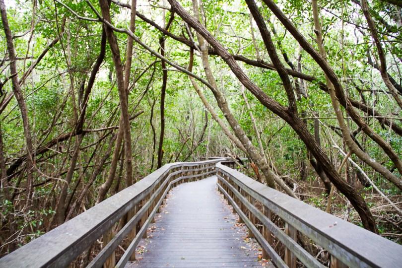 Everglades-17
