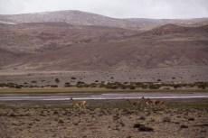 201411 - Bolivie - 0529