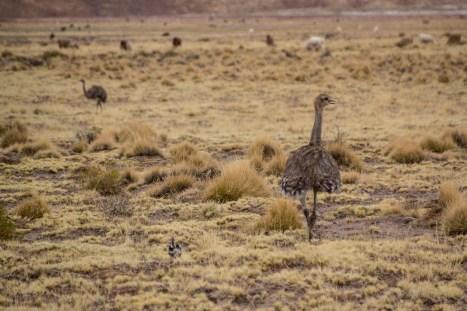 201411 - Bolivie - 0531