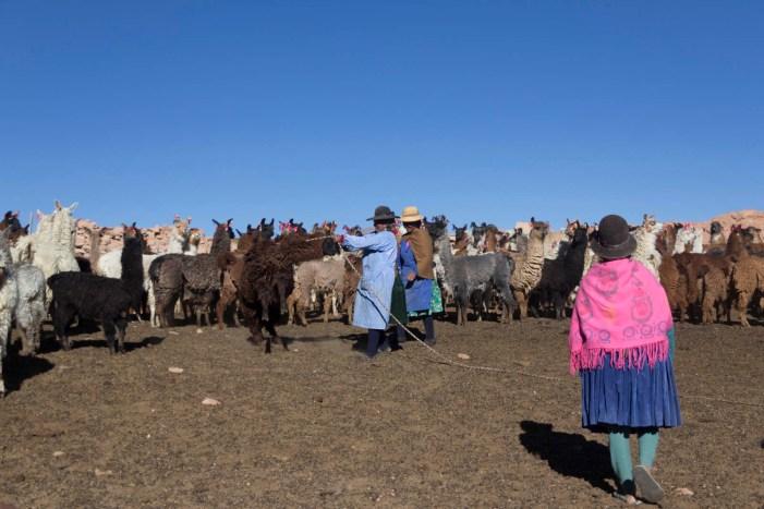 201411 - Bolivie - 0566