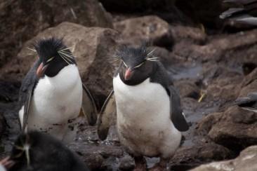 201412 - Antarctique - 0044