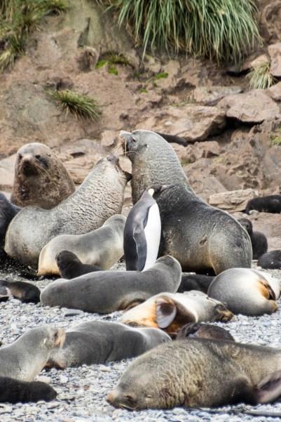 201412 - Antarctique - 0321