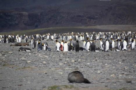 201412 - Antarctique - 0381