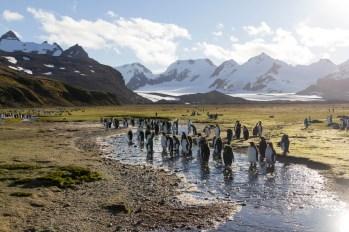 201412 - Antarctique - 0455