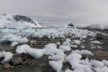 201412 - Antarctique - 1128