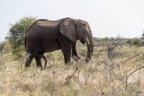 201504 - Namibie - 0047