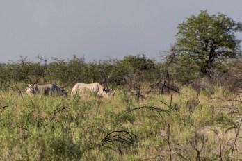 201504 - Namibie - 0076