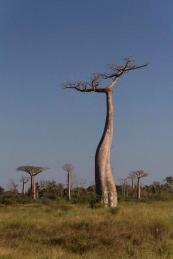 201505 - Madagascar - 0225