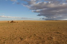 201509 - Mongolie - 1006