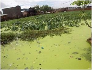 rizieres inondées