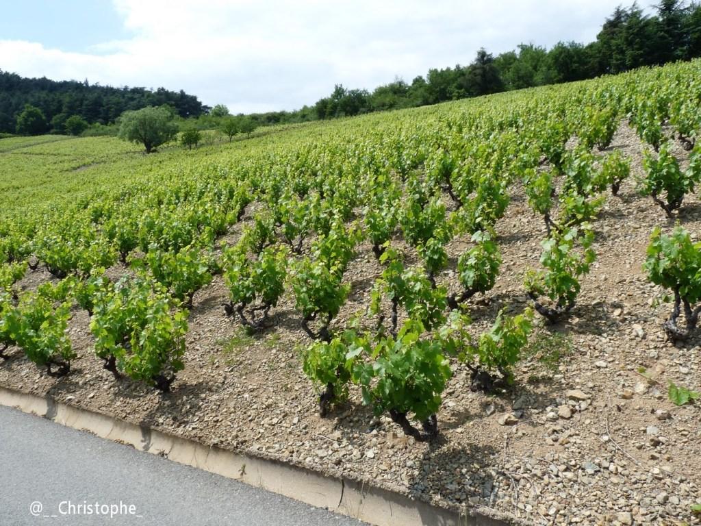 Côte de Brouilly - Beaujolais