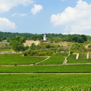 La voie des vignes - près de Santenay