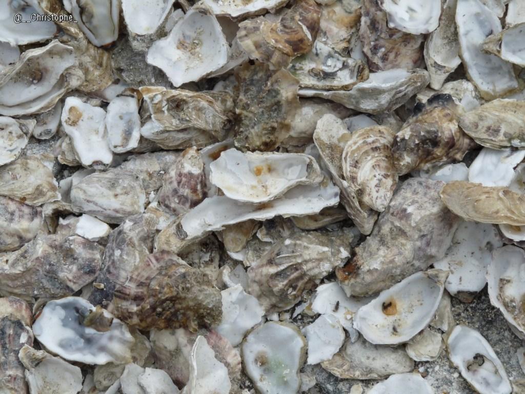 Cancale - les huîtres
