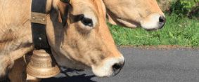 Voyages Jaccon | Fête du FIN GRAS