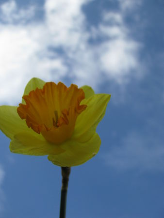 309ae 51514498 p Les fleurs printanières du Gers