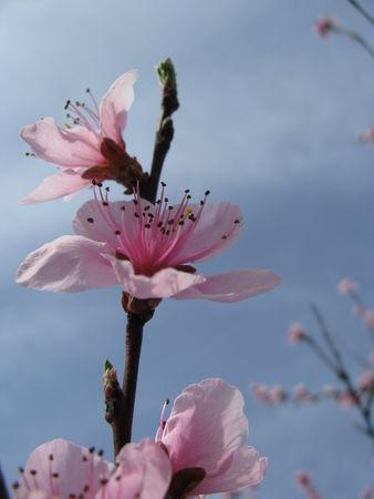 309ae 51514708 p Les fleurs printanières du Gers