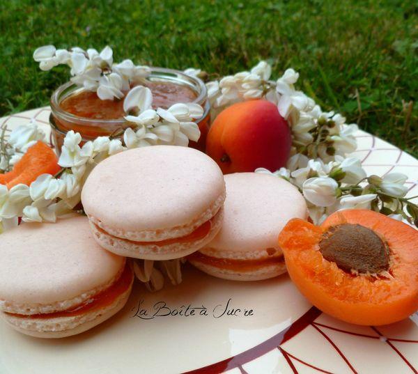 Macarons abricot acacia 3
