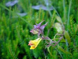 plitvice fleur
