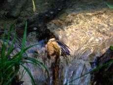 plitvice nature croatie